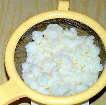 молочный или кефирный гриб