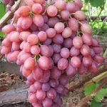Разрешен ли виноград диабетикам